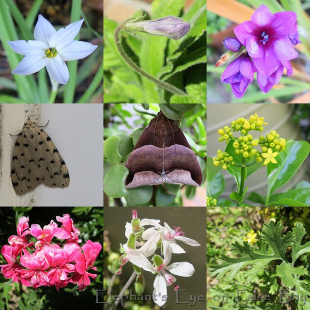 October flowers with moths