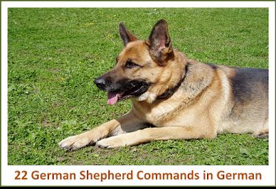 22 German Commands For German Shepherd