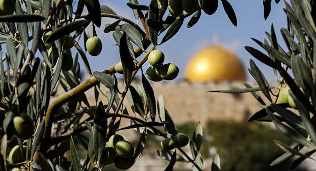 عاجل| إضراب شامل في القدس احتجاجا على قرار ترامب