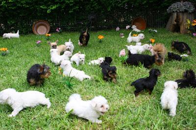 Visitando un criadero de perro