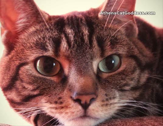 tabby wide-eyed cat