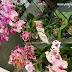 Jualan Orkid di AEON MALL Shah Alam