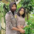 Bhayangkari Cabang Tebo Sukses Berkebun Sayur Dengan Sistim Hidroponik