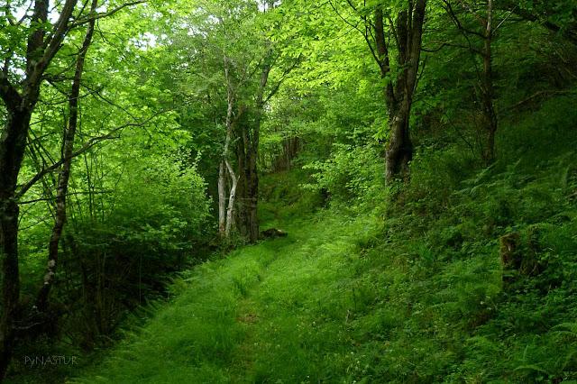 Bosque del Valle de Ponga - Asturias