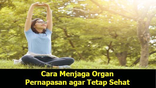 Cara Menjaga Organ Pernapasan agar Tetap Sehat