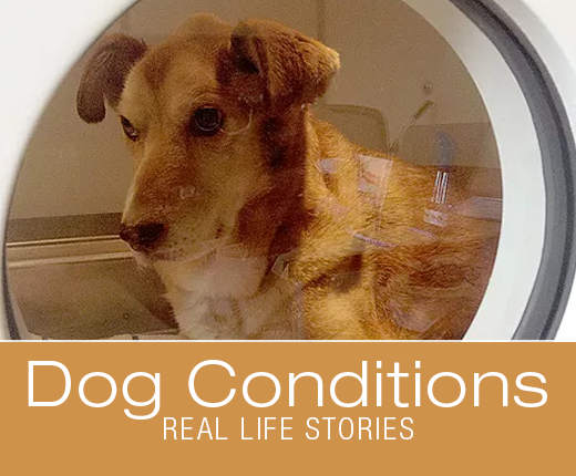 Real-life Stories -Hyperbaric Oxygen Therapy (HBOT): Athena's Thrombocytopenia