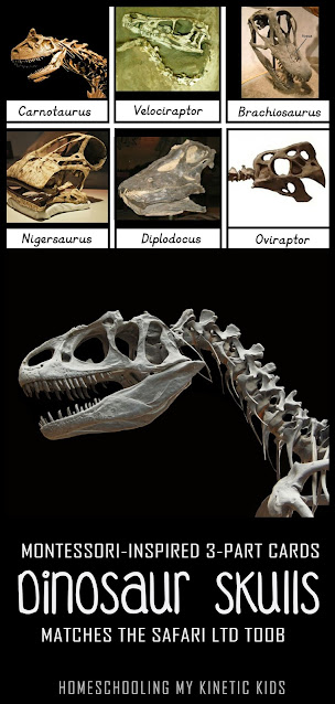 Learn about long gone dinosaurs as you explore and play with Safari Ltd Dinosaur Skulls toob.  Free printable matching cards for the toob.