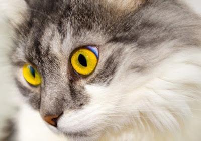 Ciri kucing sedang stres