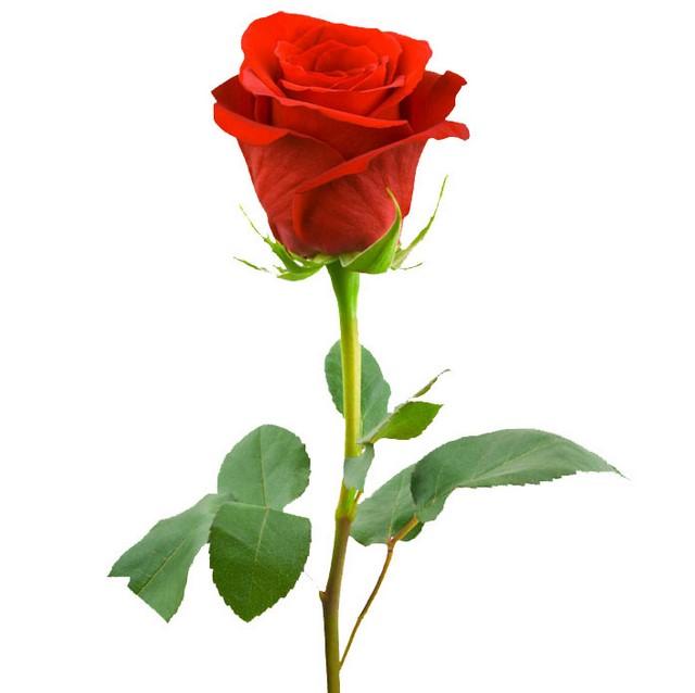 Hadiah untuk Menyatakan Cinta