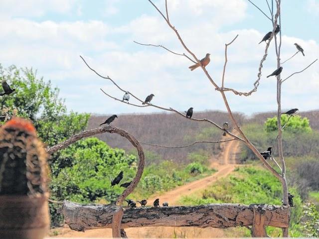 Sítio Pau Preto em Potengi se tornou referência em observação de aves no Cariri