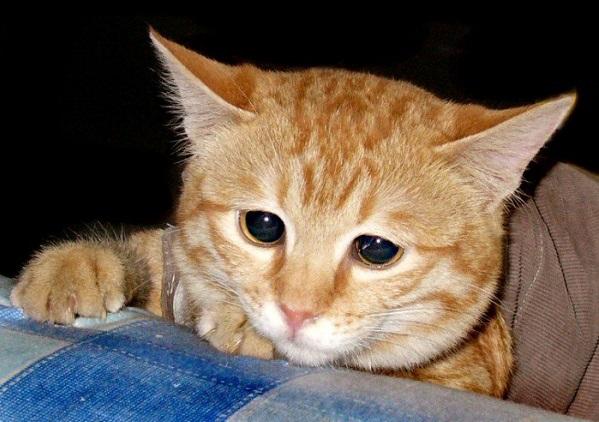 Penyebab dan Cara Mengatasi Kucing yang Stres