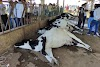Death of 11 cows due to electric shock