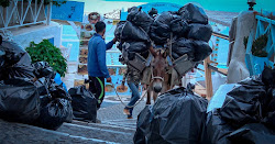 ✓ Boycott Santorini: Stop the Abuse of Donkeys