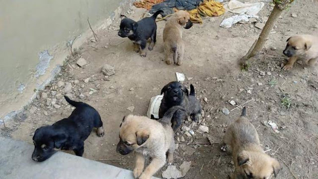 Неравнодушный мужчина обыскал всю округу, чтобы вернуть щенкам их маму