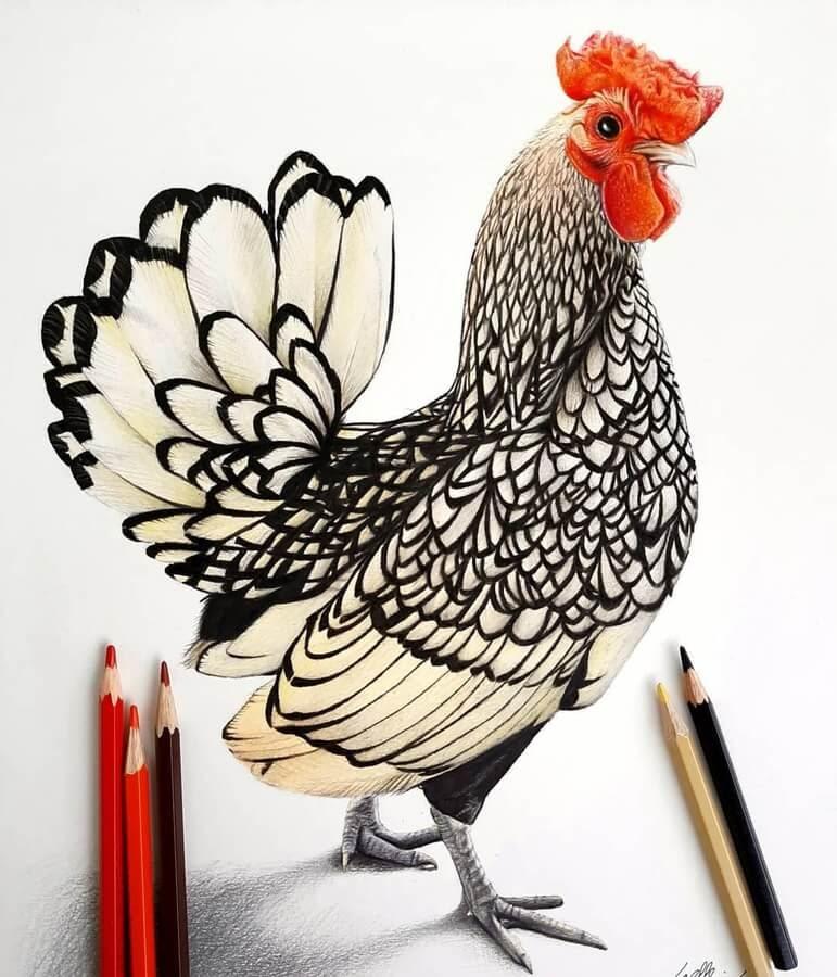 03-Fancy-patterns-rooster-Bele-www-designstack-co