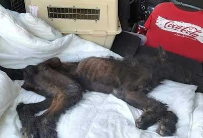 mujer deja morir a perro en Alicante por desnutrición