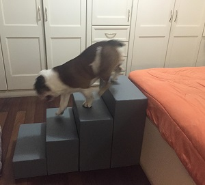 escadas para cachorros grandes
