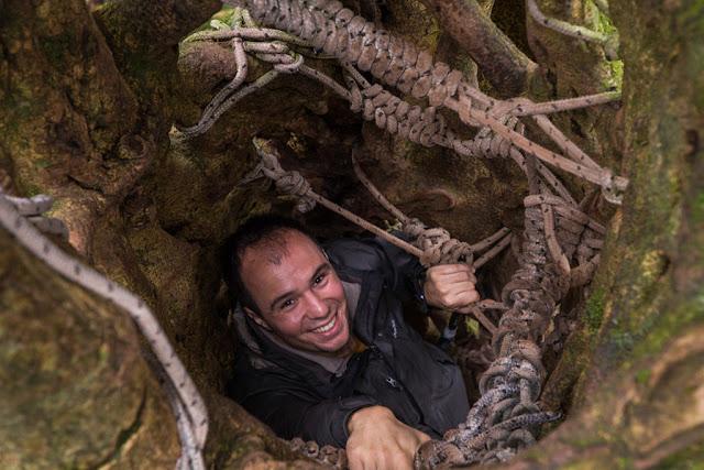 Escalando por el interior de un árbol en Monteverde, Costa Rica