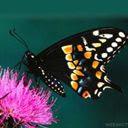 Leptir na cvijetu download besplatne pozadine slike za mobitele