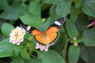 RHS Tatton Flowershow Butterfly Dome 2017