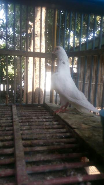 FOTO HEWAN DIKANDANG SENDIRI 085643822300