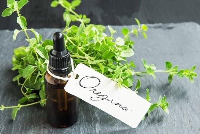 Orégano: O Melhor Antibiótico Natural, indicado até mesmo pela ciência!
