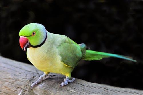 तोता की कहानी - moral story in hindi