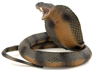 dangerous snake-the bile can cure its poison