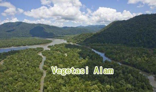 Pengertian Vegetasi Alam