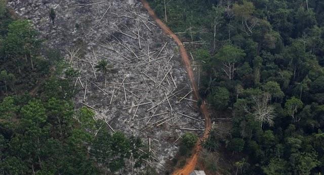 O Sistema de Alerta de Desmatamento (SAD), um dos sistemas mais usados para monitorar o desmatamento da Amazônia, relatou que nos últimos 12 meses houve um aumento de 15% da área desmatada em relação ao período anterior.