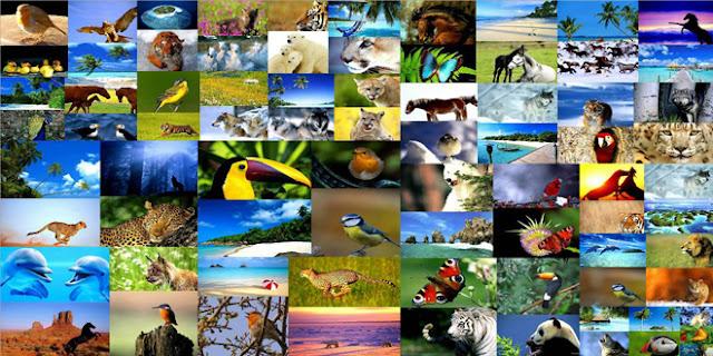 Αμείωτος ο ρυθμός απώλειας της βιοποικιλότητας