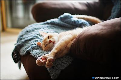 صور صور قطط كيوت 2020 خلفيات قطط جميلة جدا cats29.png