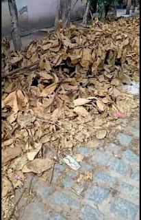 Em Mari moradores reclamam do lixo e mato em ruas do centro, e se dizem abandonados pela gestão  do município
