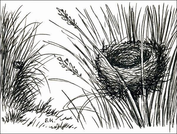 nidos de aves argentinas Volatinero