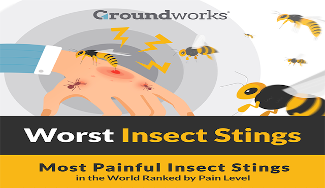 How to Stop Stinging Insects From Getting into Your Home #Infographic
