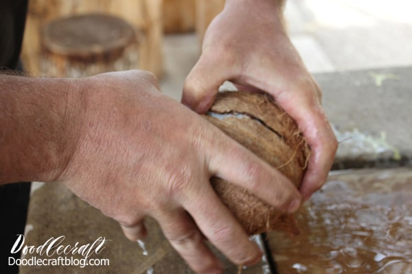 Breaking coconut in half with bare hands