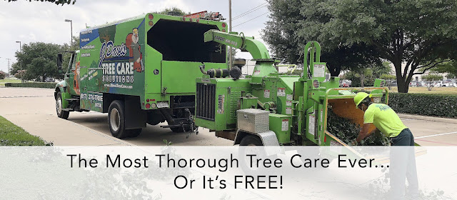 Tree Trimming Colleyville - Choose properly trained and certified arborists