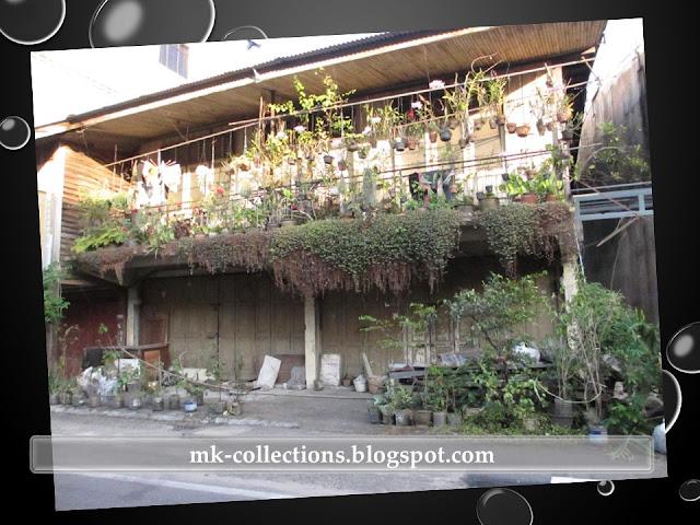 Segmen Rumah Kedai Ber 'Pokok'