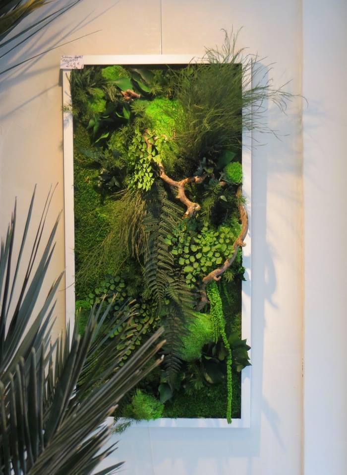 plante sans arrosage affordable plantes with plante sans arrosage best les plantes sans. Black Bedroom Furniture Sets. Home Design Ideas