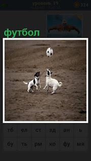 на поле две собаки играют в футбол мячиком