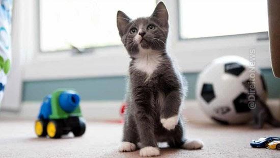 tjsc garante locataria residir gato estimacao