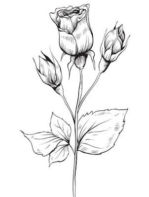 Menggambar bunga mawar