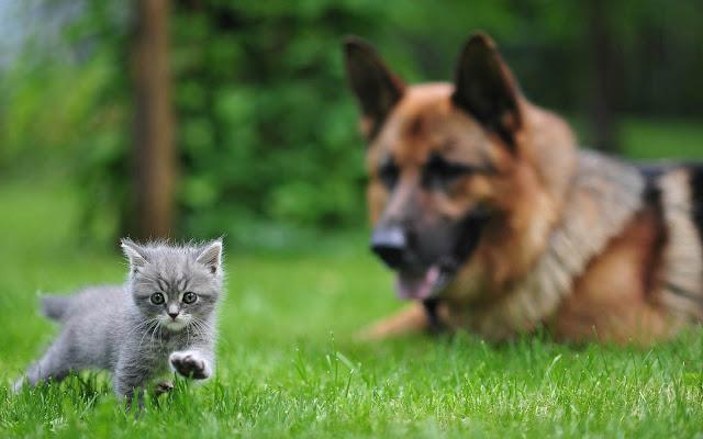 Hond en kat beste vrienden