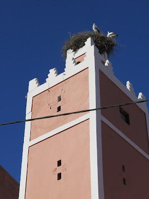 Zigüeñas en un minarete de Demnate