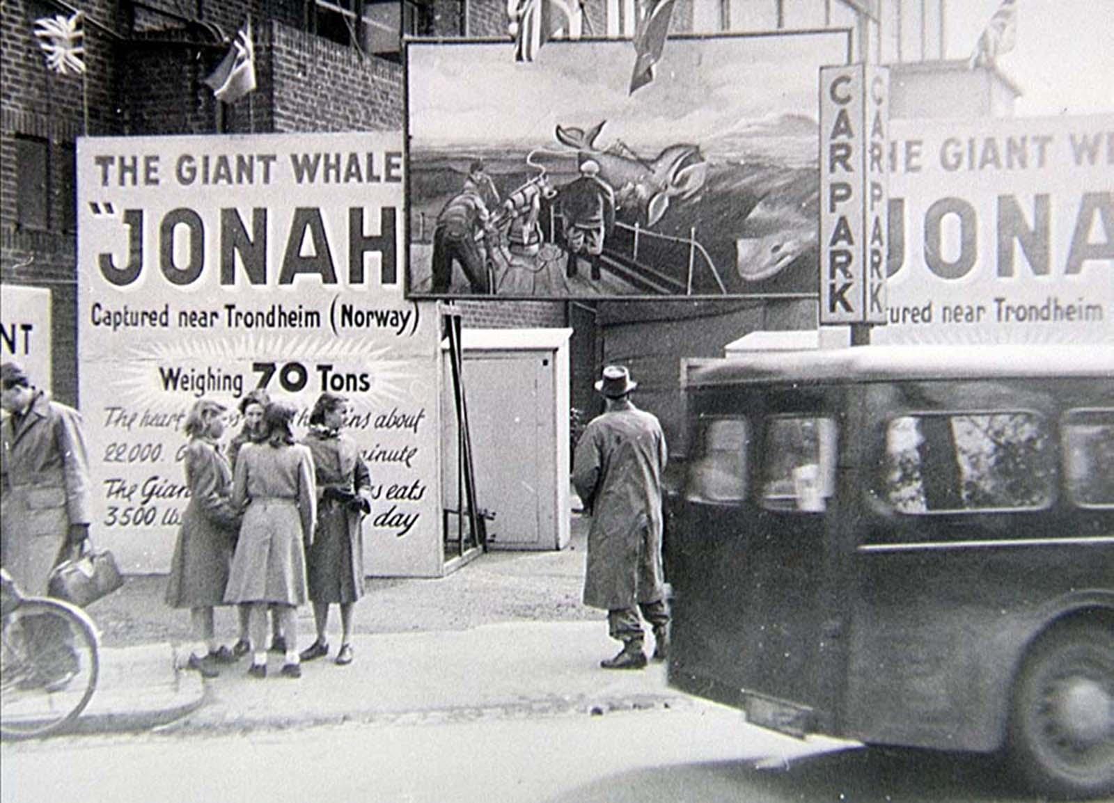 Las ballenas muertas en descomposición que recorrieron Europa, 1950-1970