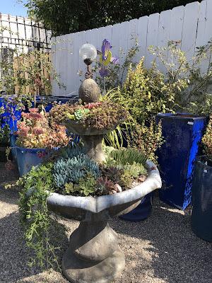 concrete fountain as succulent planter