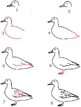 Cara menggambar bebek sedang berjalan