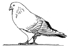 Pigeons Coloring Pages For Kids