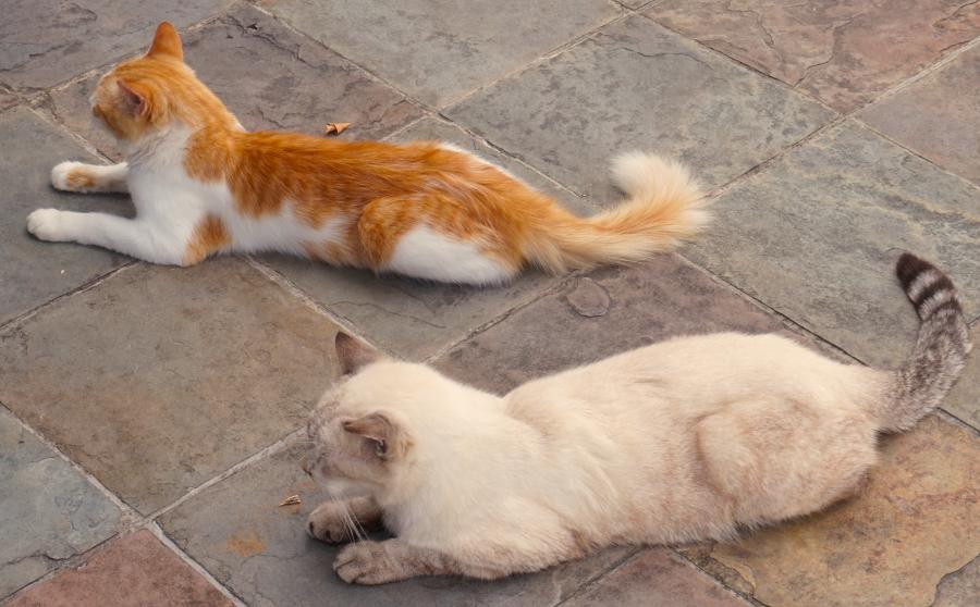 When cats chillax like this, I feel really happy.