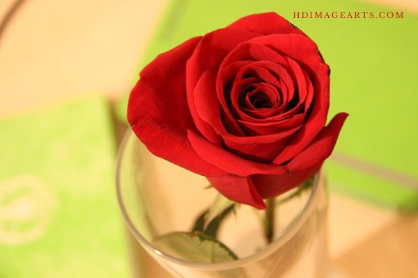 flowers-lmages-for-love-3